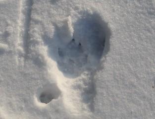 Nicht immer ganz einfach ... aber es ist Raubwild - ein Fuchs