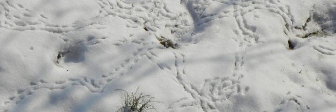 Bergleben im Schnee ist sichtbar